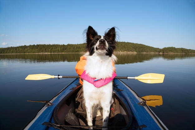 Cão em um colete salva-vidas flutuando no lago em um caiaque