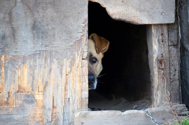 Cão em uma cadeia em uma casa de cachorro