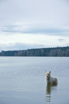 Cão em uma lagoa