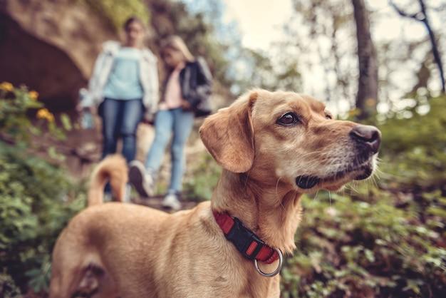 Cão em uma trilha da floresta