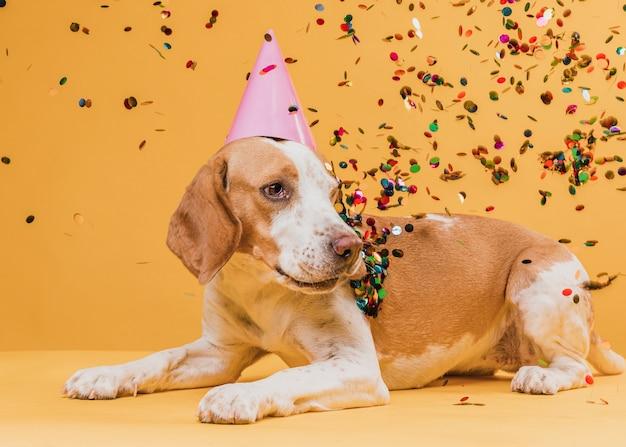 Cão engraçado com chapéu de festa e confetes