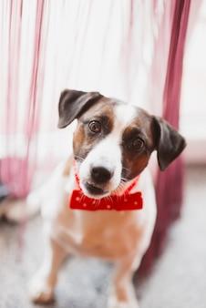 Cão engraçado com laço vermelho