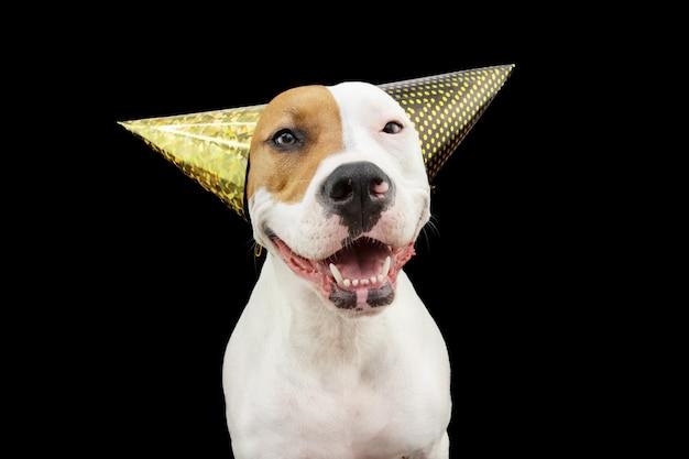 Cão engraçado e feliz comemorando o ano novo, aniversário e carnaval usando dois chapéus de festa. isolado em fundo preto