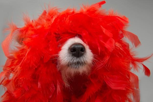 Cão engraçado no carnaval do carnaval com a boa de pena vermelha