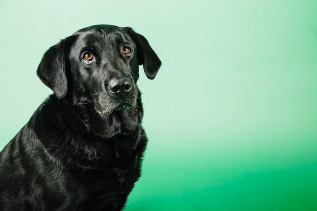 Cão engraçado no fundo verde