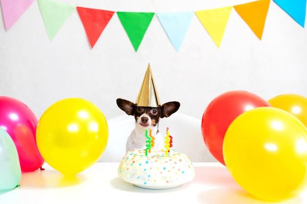 Cão engraçado pequeno bonito com um bolo de aniversário e um chapéu de festa comemorando aniversário com amante de menina. mulher jovem e bonita e um cachorro no caps de férias. feliz aniversário. conceito de amizade ..