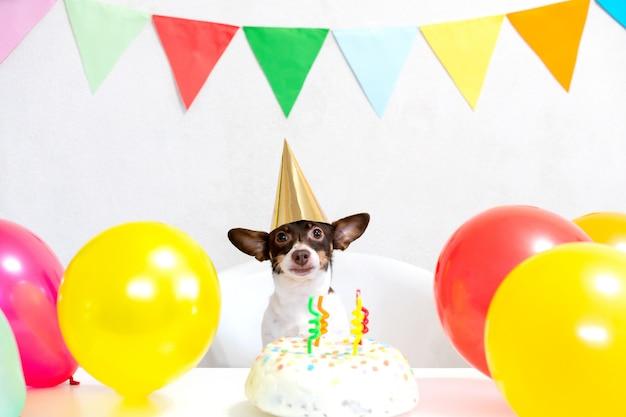 Cão engraçado pequeno bonito com um bolo de aniversário e um chapéu de festa comemorando aniversário