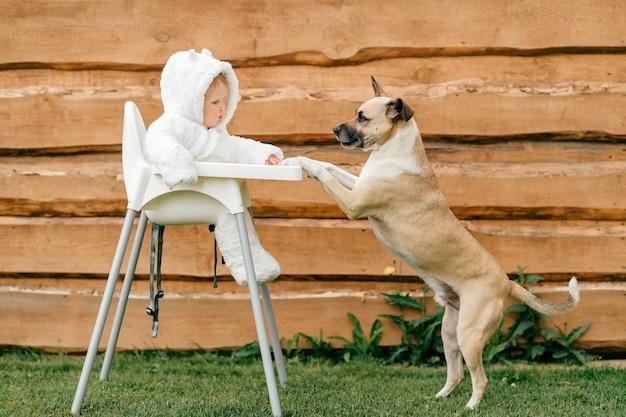 Cão engraçado que está com as patas dianteiras na cadeira alta com o bebê pequeno no traje do urso que senta-se lá.