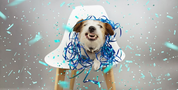 Cão engraçado que sorri e que mostra os dentes com serpentinas azuis, comemorando o aniversário, o carnaval ou o ano novo sentando-se em uma cadeira escandinava.