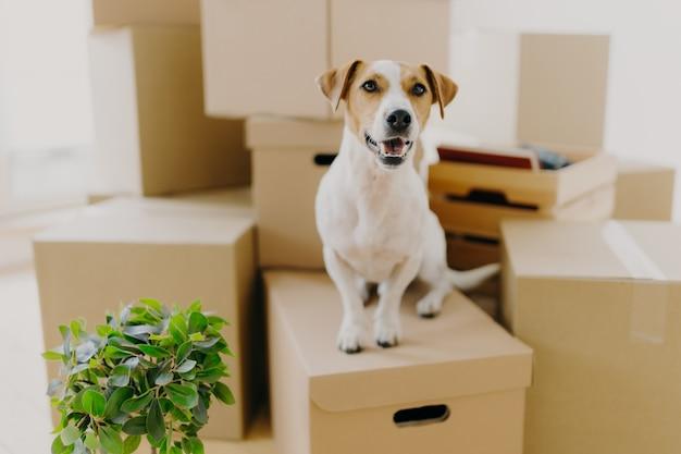 Cão engraçado senta-se em caixas de papelão,