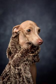 Cão engraçado vestido como um rei feiticeiro. natal