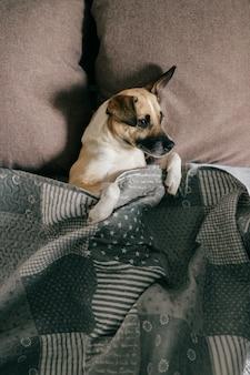 Cão feliz, deitado de costas na cama, sob o cobertor