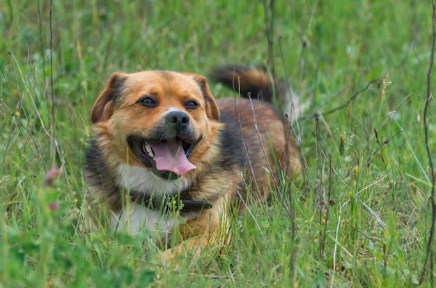 Cão feliz fofo sentado em uma grama fresca de verão