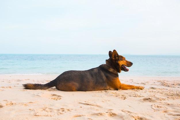 Cão feliz relaxante na praia.