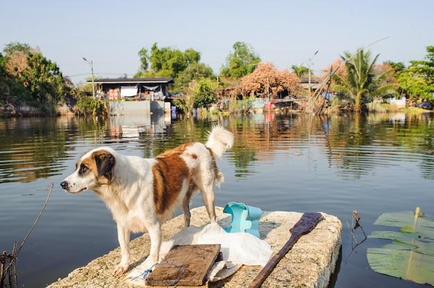 Cão ferido para segurança em uma seção inundada de estrada em bangkok