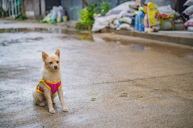 Cão fofinho na aldeia de etong na cidade de kanchanaburi, tailândia. mina pilok, mina the old perto da fronteira entre a tailândia e mianmar