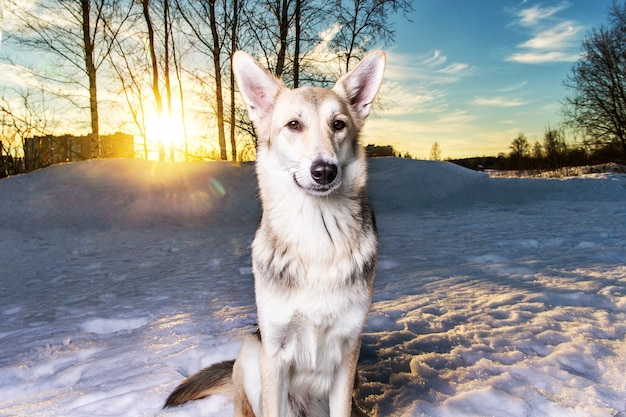 Cão fofo de raça misturada caminhando na neve e olhando para a câmera em winter park
