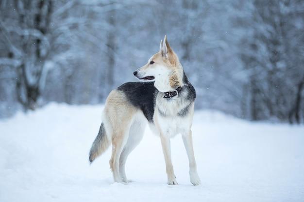 Cão fofo de raça misturada lá fora