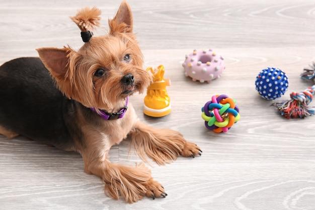 Cão fofo e engraçado e acessórios para animais de estimação em casa