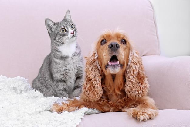Cão fofo e gato juntos no sofá em casa