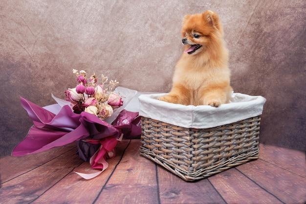 Cão fofo vermelho senta-se lindamente na cesta e coloca as patas dianteiras na borda da cesta.