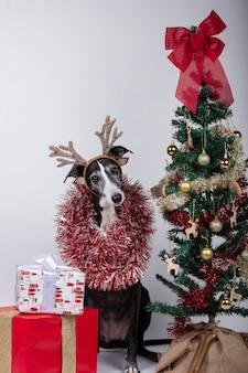 Cão galgo com chifres de rena e guirlandas ao redor do corpo, presentes e árvore de natal