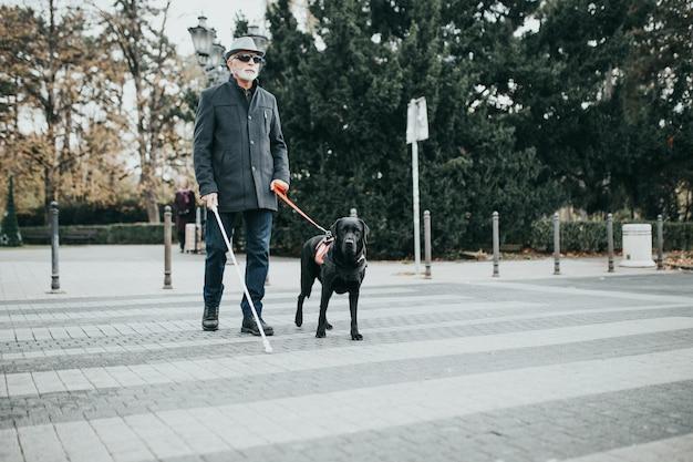 Cão-guia ajudando cego a atravessar a rua.