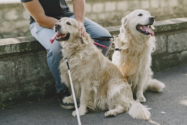 Cão-guia ajudando cegos na cidade. bonitão cego descanse com o golden retriever na cidade.