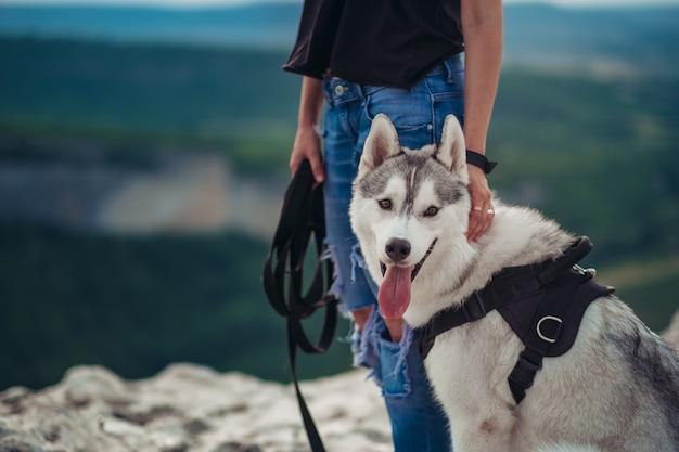Cão husky cinzento e branco nas montanhas ao pôr do sol