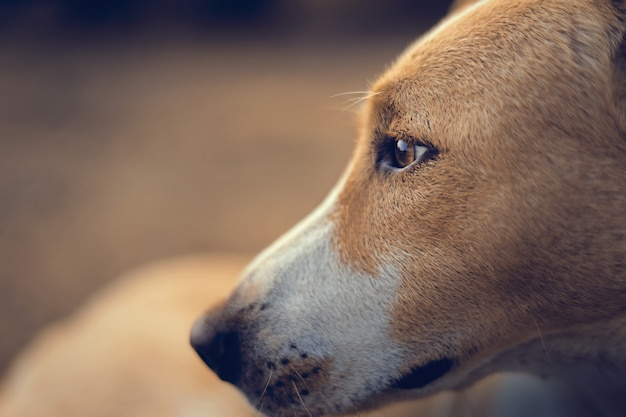 Cão indiano close-up de fotos