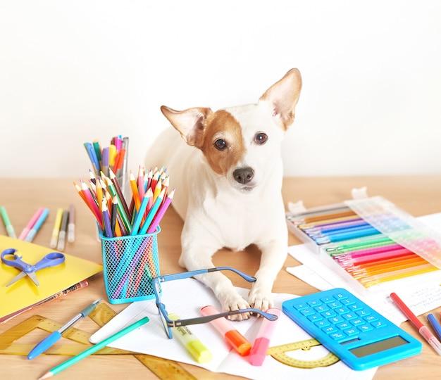 Cão jack russell terrier em uma mesa perto de material escolar