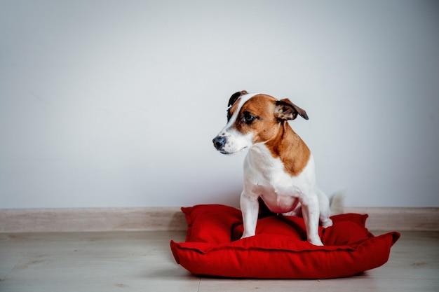 Cão jovem sentado no travesseiro vermelho em casa