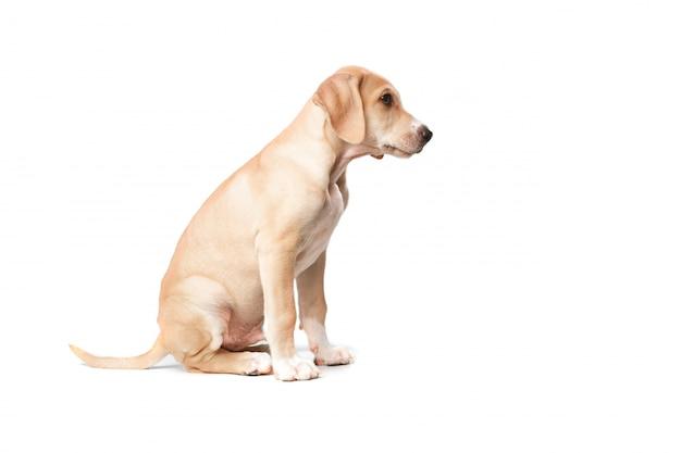 Cão loira de cabelos curtos sentada de lado