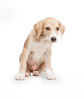 Cão loira de cabelos curtos sentado em frente