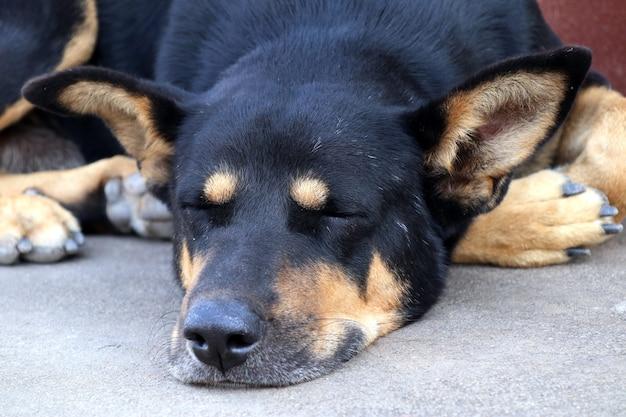 Cão na estrada dormindo no chão