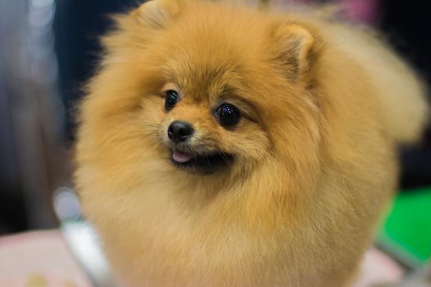 Cão na exposição de cão