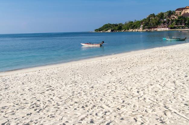Cão na praia tropical e areia no pôr do sol