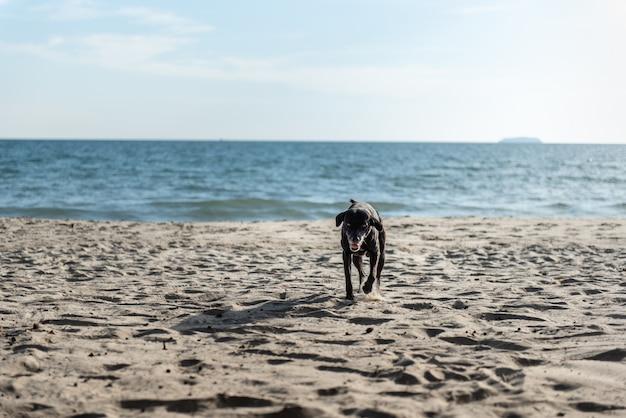 Cão na praia.