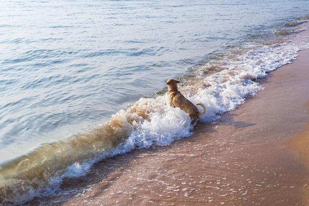 Cão nadar em mares revoltos.
