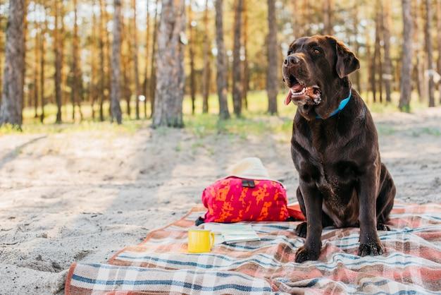 Cão no pano de piquenique na natureza