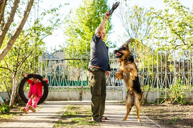 Cão pastor alemão pulando