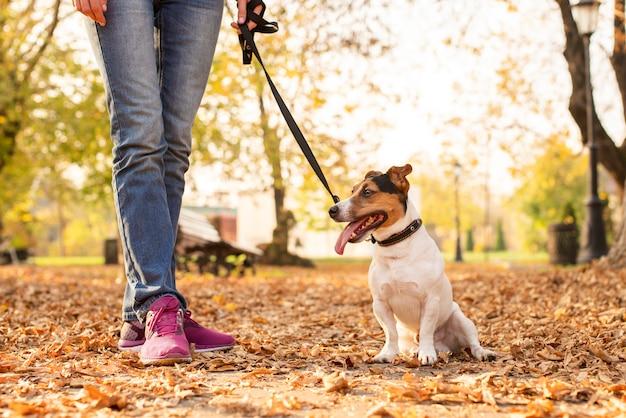 Cão pequeno bonito ao ar livre com proprietário