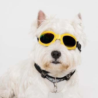 Cão pequeno bonito com óculos