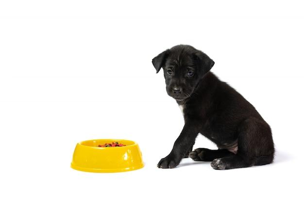 Cão pequeno bonito com tigela de comida de cachorro, isolada no fundo branco