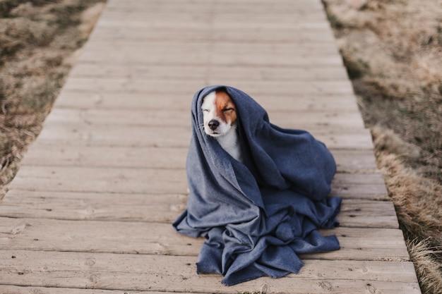Cão pequeno bonito com um casaco cinza. sentado no chão de madeira. conceito de outono ou inverno. ao ar livre