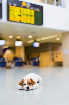Cão pequeno bonito esperando paciente no aeroporto