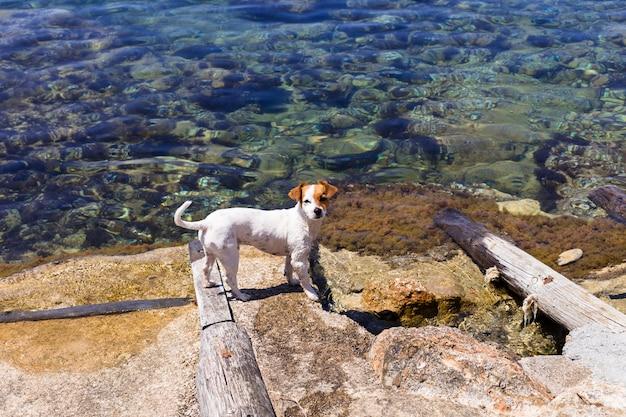 Cão pequeno bonito nadando e se divertindo na praia em ibiza água bonita. conceito de verão e feriados