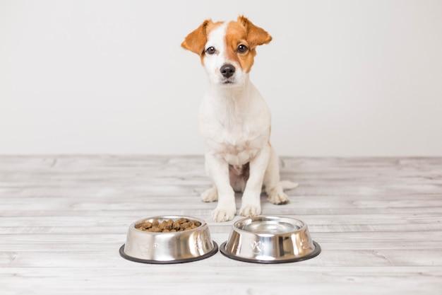 Cão pequeno bonito sentado e esperando para comer sua tigela de comida de cachorro