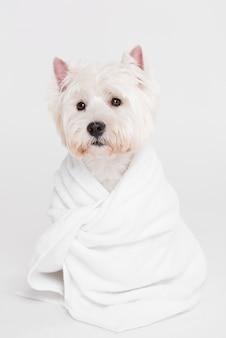 Cão pequeno bonito sentado em uma toalha