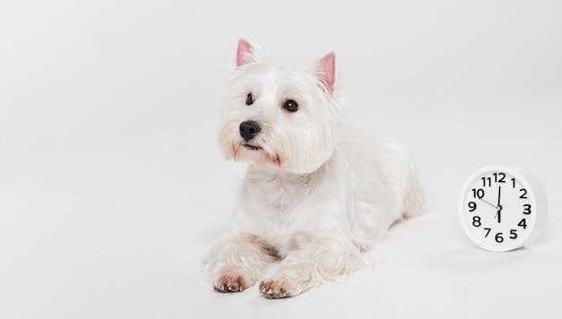 Cão pequeno bonito sentado